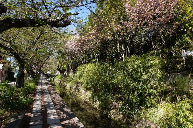 Filosofen-wandeling-Kyoto