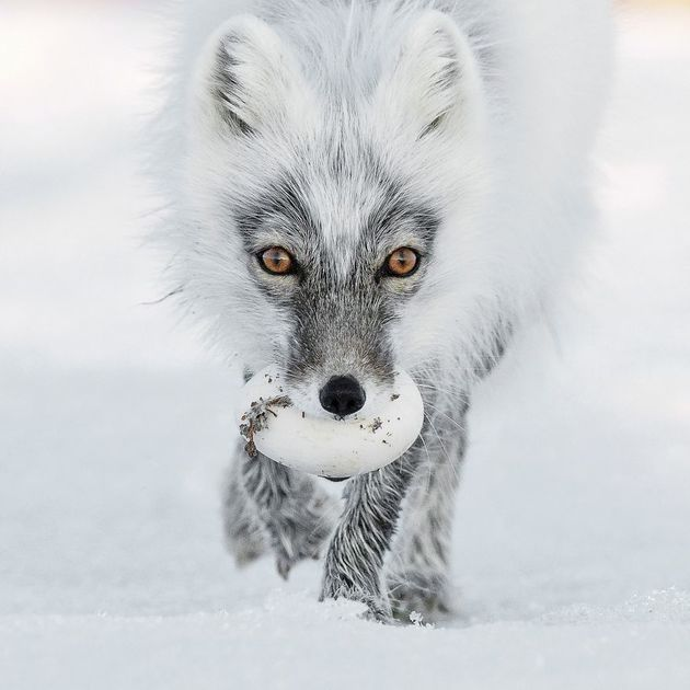 finalists-wildlife-photographer-of-the-year-2017-13-59ba29530f947__880