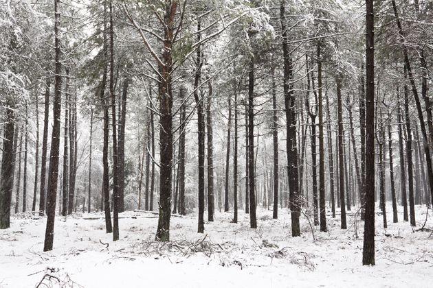 fotograferen-sneeuw-tips