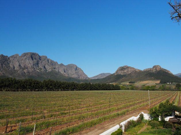 Franschhoek La Bri Wine Estate (3)