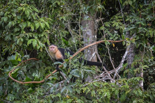 gamboa-rainforest-aap