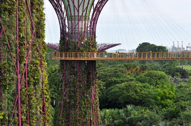 gardens-by-the-bay-skywalk