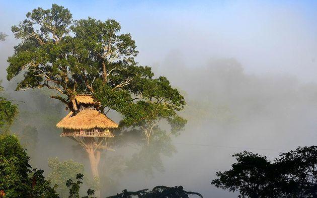 gibbon-experience-boomhut-laos