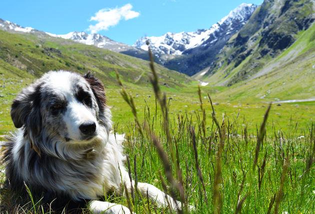 hond-zomer-bergen
