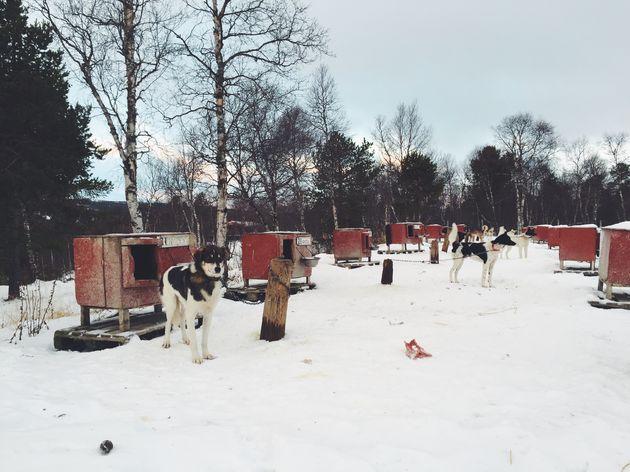 husky's-tour-noorwegen