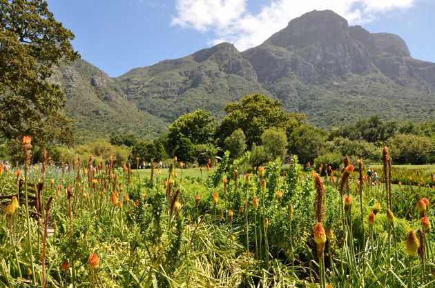 Kirstenbosch 4