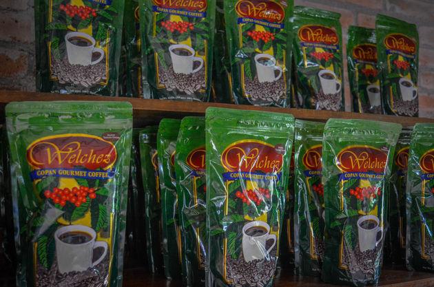 Koffieplantage-honduras-2