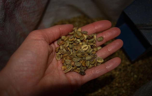 Koffieplantage-honduras-3