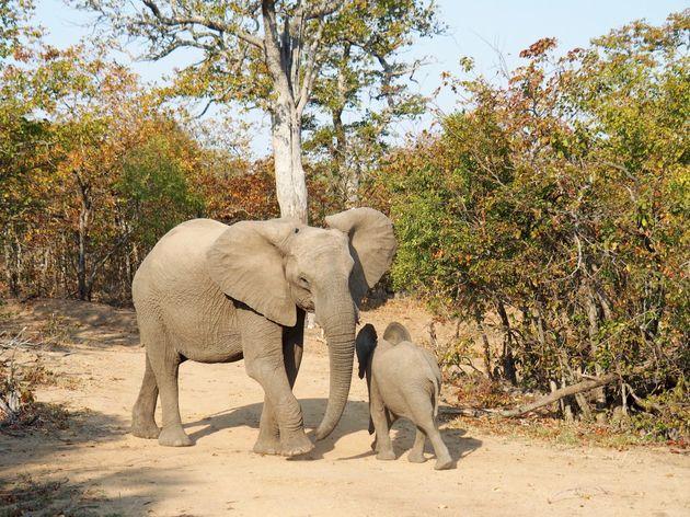 Kruger-park-rondreis-Zuid-Afrika