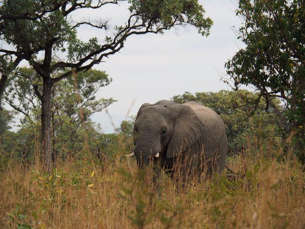krugerpark-zuid-afrika-13
