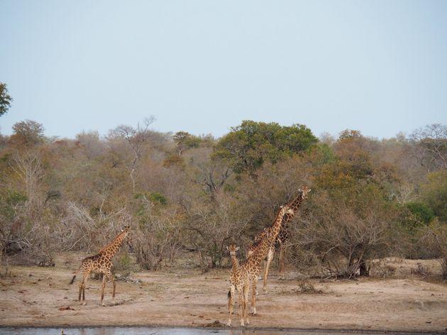 krugerpark-zuid-afrika-17