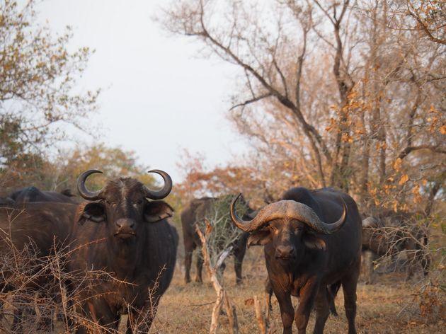 krugerpark-zuid-afrika-22