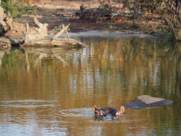krugerpark-zuid-afrika-24