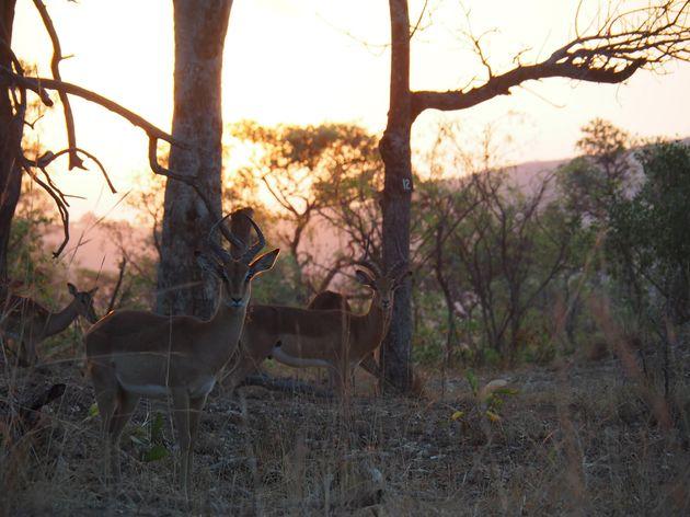 krugerpark-zuid-afrika-25