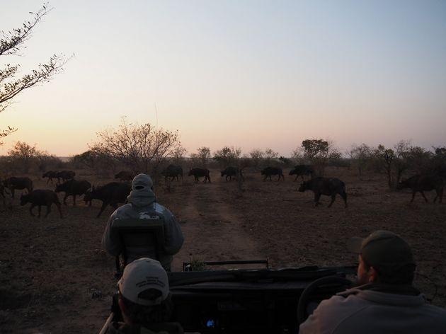 krugerpark-zuid-afrika-26