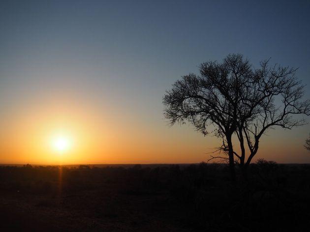 krugerpark-zuid-afrika-28