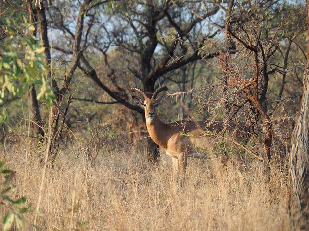 krugerpark-zuid-afrika-9