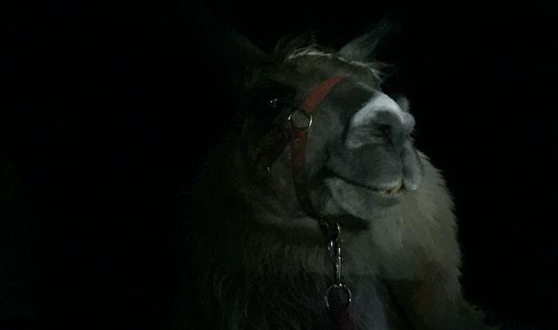 Lamas_middernacht_grand_galibier