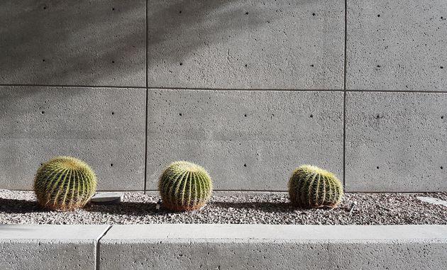 Las_vegas_cactus