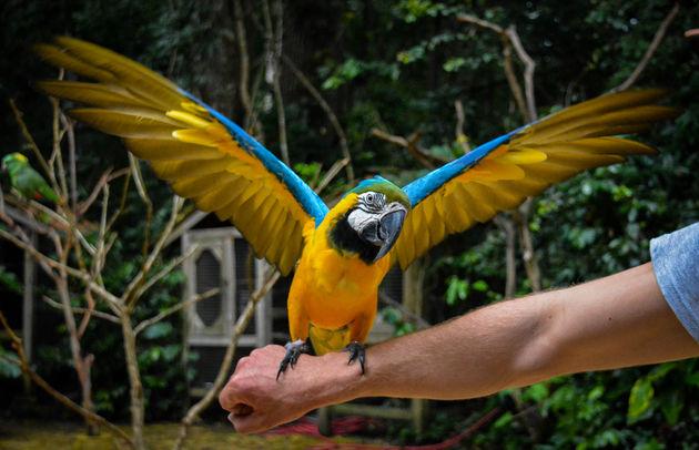 macaw-mountain-honduras