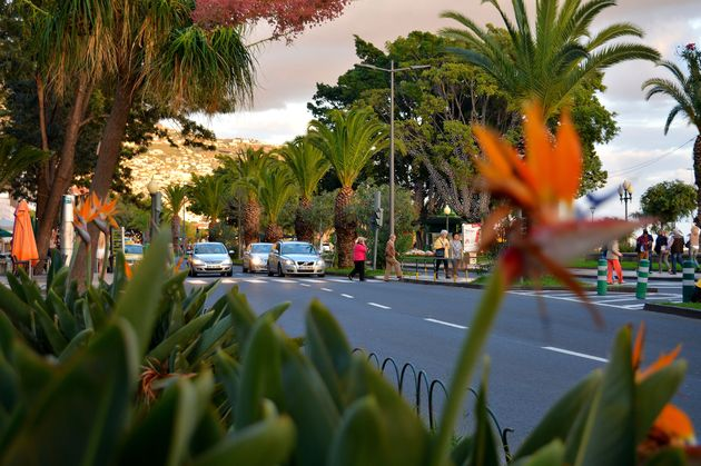 maderia-funchal