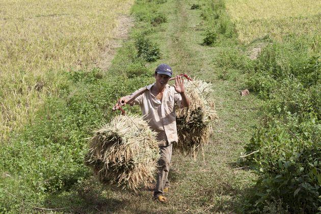 man-rijstvelden