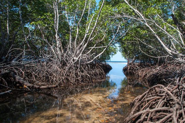 mangrovebos-nusa-lembongan