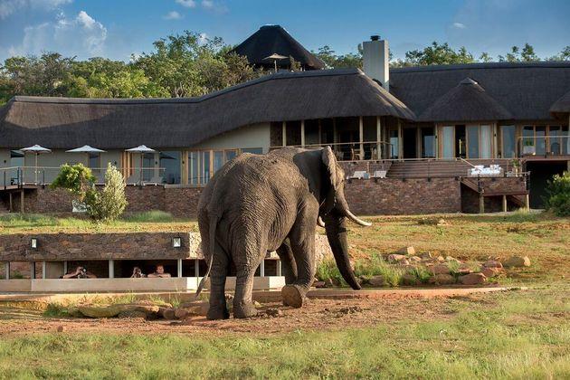 mhondoro-lodge-olifant