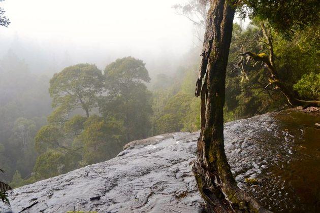 mist_natuur_tasmanie
