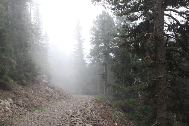 mist-ochtend-bomen