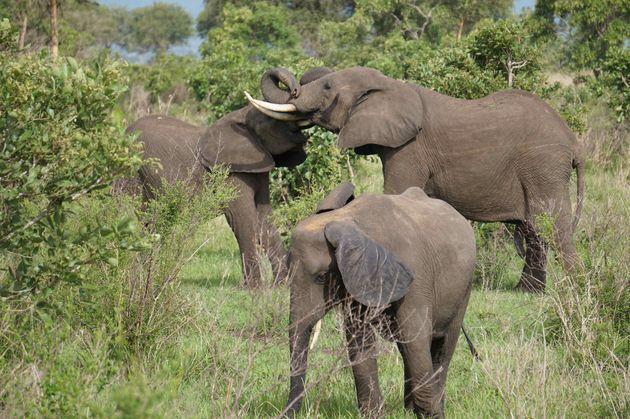 mukumi-safari-olifanten