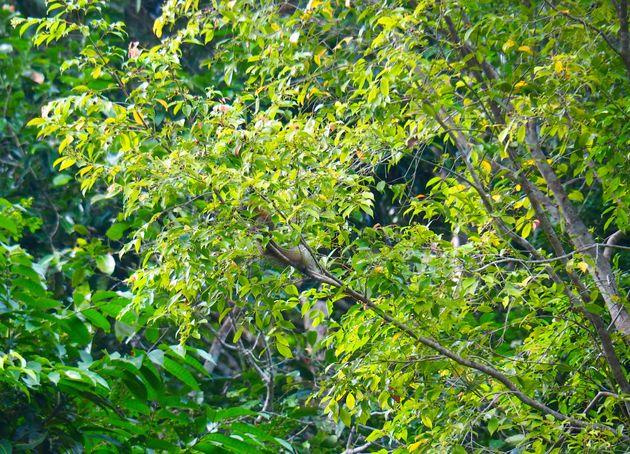 Natuur Cheow Lan meer (6)