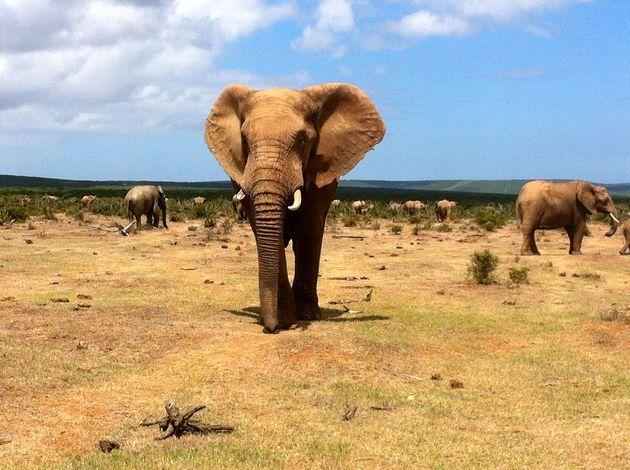 olifant-addo-np
