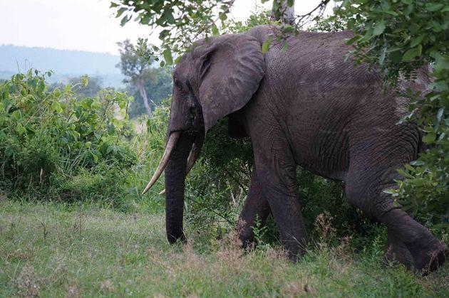 olifant-mukumi-safari