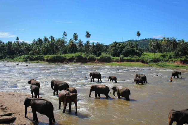 olifanten_rivier
