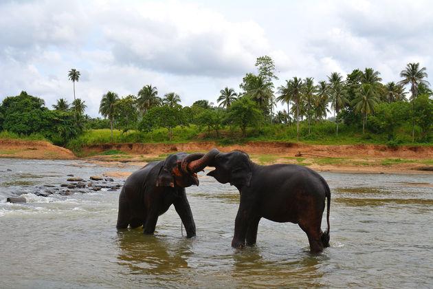 olifanten-weeshuis-spelen
