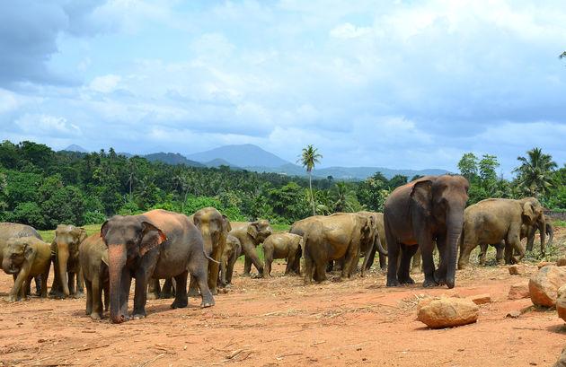 olifanten-weeshuis