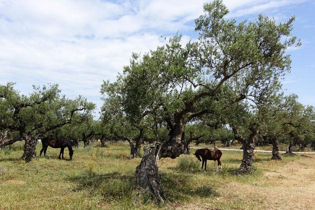 olijfolie-proeven-zakynthos