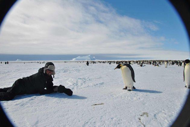 ontmoeting-pinguins