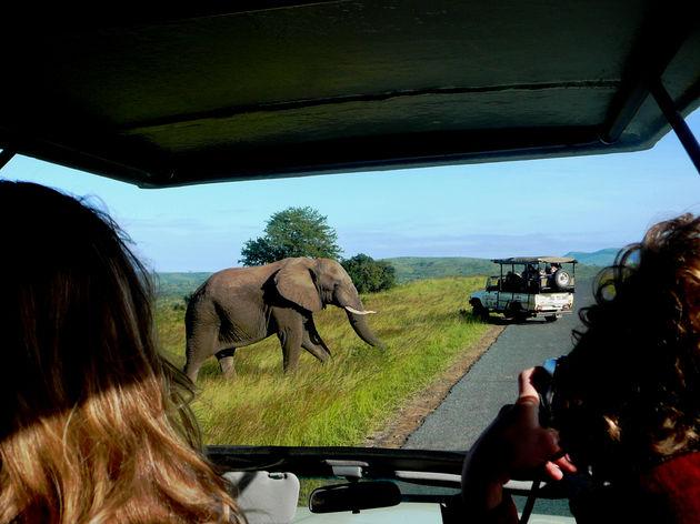 op_safari_kruger_park_zuid_afrika