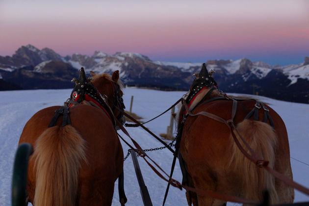 paarden-sneeuw-siusi
