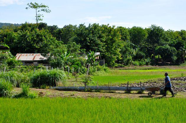 Phu-Ruea-Ruean-Mai-Resort