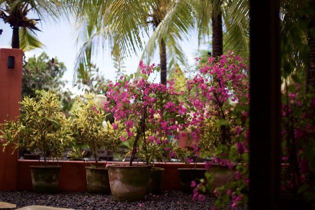 pinkcoco-bali-bloemen