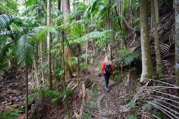 regenwoud-lamington-hiken