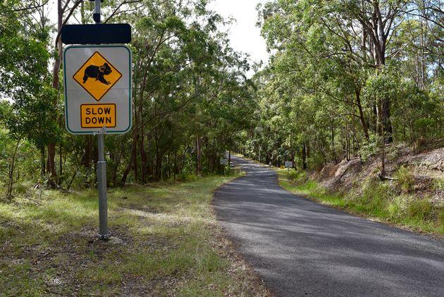 roadtrip-australië-koala's-weg.