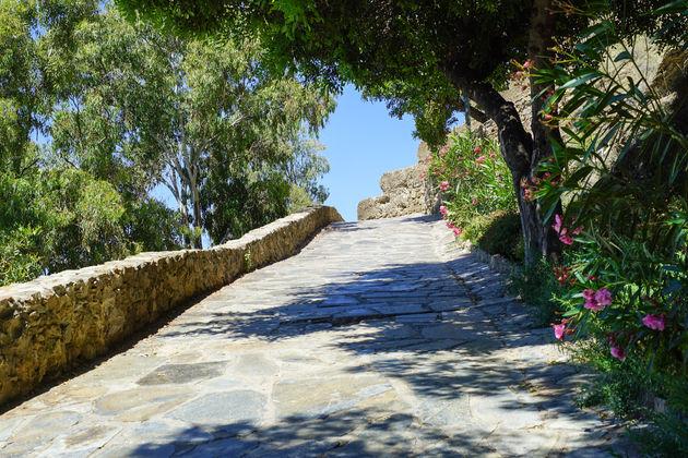 Route met olijfbomen