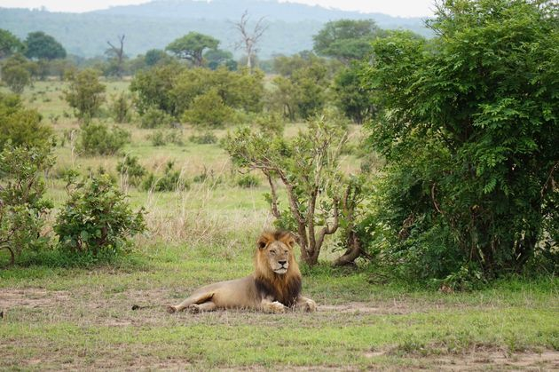 safari-afrika