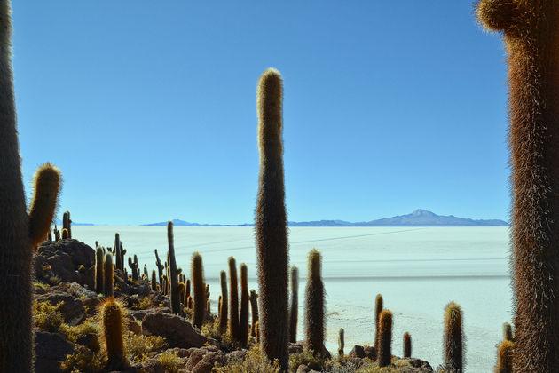 salar-de-uyuni-Cactuseiland
