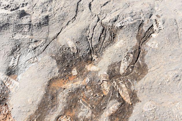 Sayh-plateau-fossielen