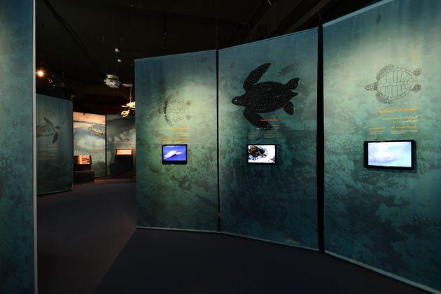 schildpadden-museum-ras-al-jinz